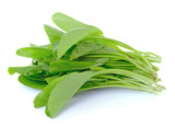 Choy sum, a kind of chinese vegetable