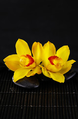 Yellow orchid with zen stones on mat