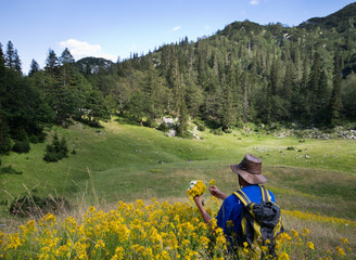 Herbalist picking herbs on valley in high mountains