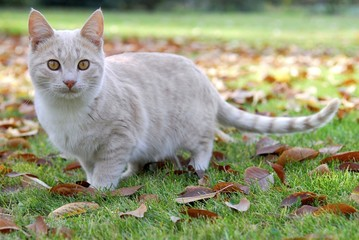 beige cat between autumn leaves