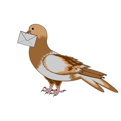 A pigeon with a letter on a white background
