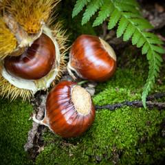 castagne nel bosco