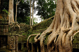 Angkor - cambodia - the Ta Prohm temple covered by huge roots