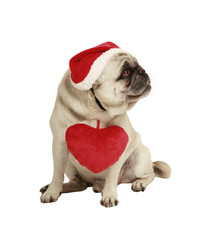 dog with hat and heart