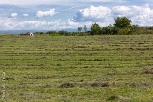 Field With Rows of Mowed Grass