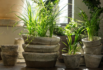 Green plants in old clay pots