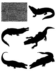 Silhouettes  of crocodiles and skin-vector