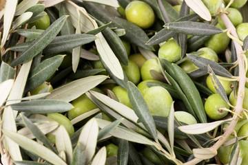 Mucchio di olive e foglie verdi