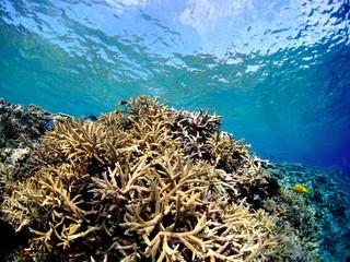 南国のたくさんの珊瑚