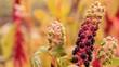 чёрные плоды, ягоды растения, цветка выращенные в саду, огороде