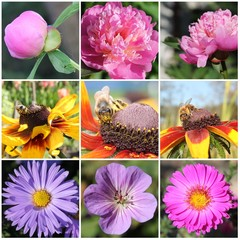 Flowers and bees collage