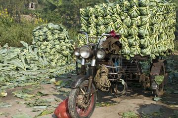 Ghatakpur Cualiflower market