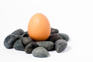 ovo a nascer das pedras