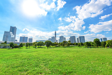Landscape grass prospects the Yokohama city buildings