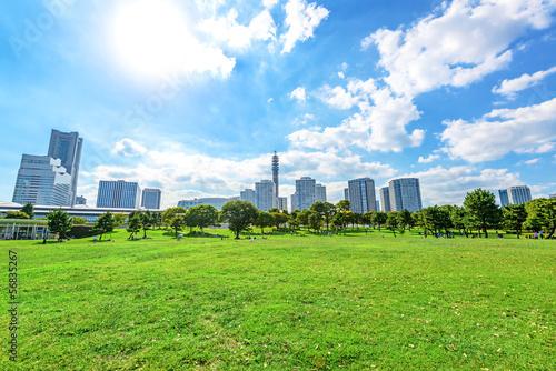 Landscape grass prospects the Yokohama city buildings