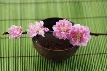 Branch Cherry blossoms on bowl on green mat