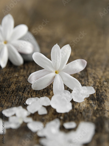 Tropical white flower and  pile of white salt ,stone