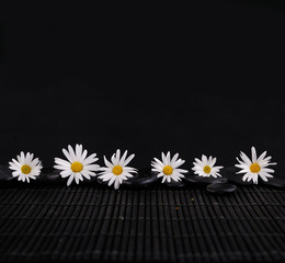 Six white daisy flowers and zen stone on mat