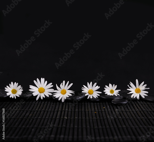 Six white daisy flowers and zen stone on mat