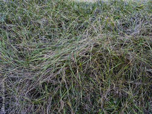Texture di fili d'erba
