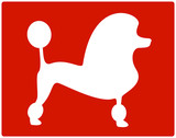 white isolated dog poodle icon on red background