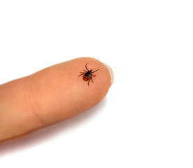 Tick human finger