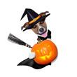 halloween witch dog