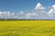 Dutch countryside landscape with rapeseed and wind turbines
