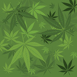 Vector marijuana background