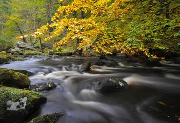 autumn woodland stream in yorkshire