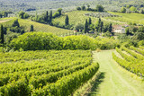 Fototapety Wine Hill Italy