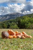 Mushrooms in Spanish pyrenees