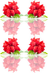 Seamless rose  pattern.