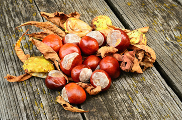 Horse chestnut on the wooden background