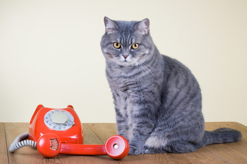 Retro red telephone and big cat on table
