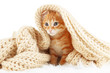 Cute little red kitten in scarf isolated on white