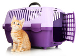 Cute little red kitten with travel plastic cage isolated