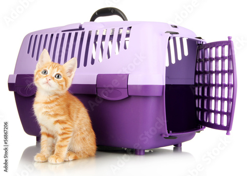 Papiers peints Porter Cute little red kitten with travel plastic cage isolated