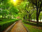 Green city park. Shanghai, china - 56869635