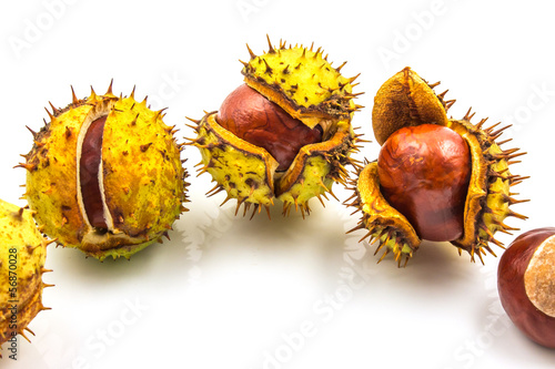 Horse chesnut isolated on white