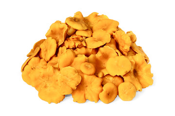A heap of raw edible chanterelles on white