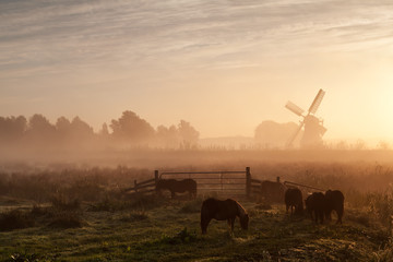 pony on pasture and windmill in dense sunrise fog