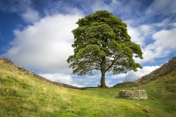 "Sycamore Gap (the ""Robin Hood Tree"")."
