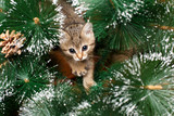 Beautiful kitten with fir tree
