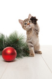 Kitten playing with red ball and twig of fir