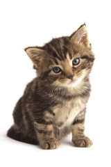Cute kitten looking to camera, white background.