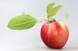 Apfel06