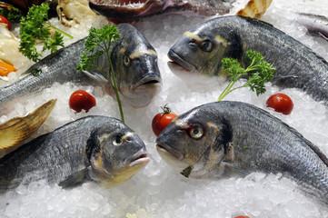 présentation de poissons