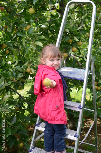 pomme dans la main