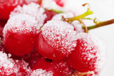 Frozen red currant berries.
